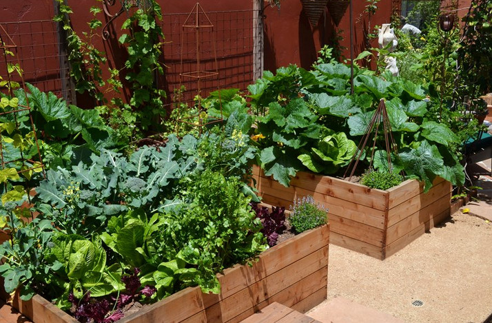 vegetable garden landscaping in sydney